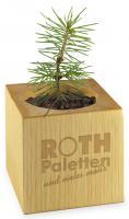 Plant-wood alder standard paper incl. 1 Engraving - Summerflowers